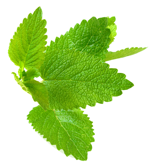 Herb Hedgerow Lemon Balm Skincare