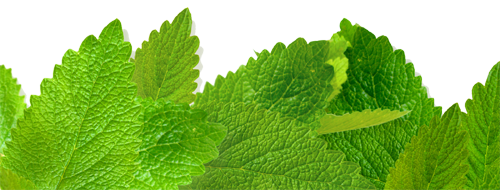 Lemon Balm - Uses in Natural Herbal Skincare