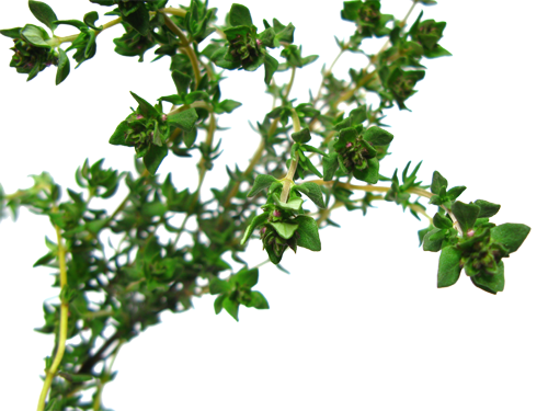 Herb-Hedgerow-Thyme-Essential-Oil