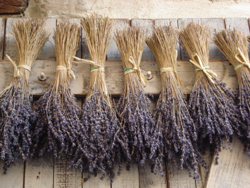 Lavender - Uses in Natural Beauty & Skincare