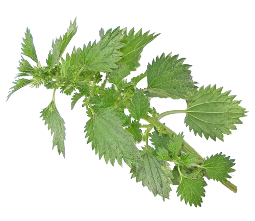 Nettle Herbal Beauty