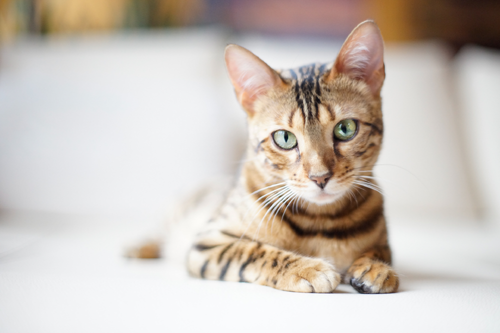 13 Animal Products in Cosmetics