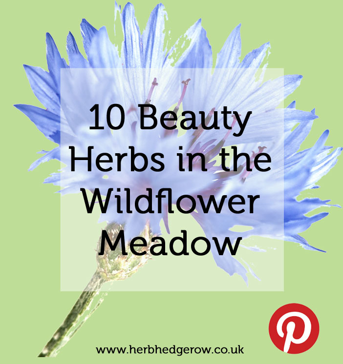 10 Beauty Herbs in the Wildflower Meadow