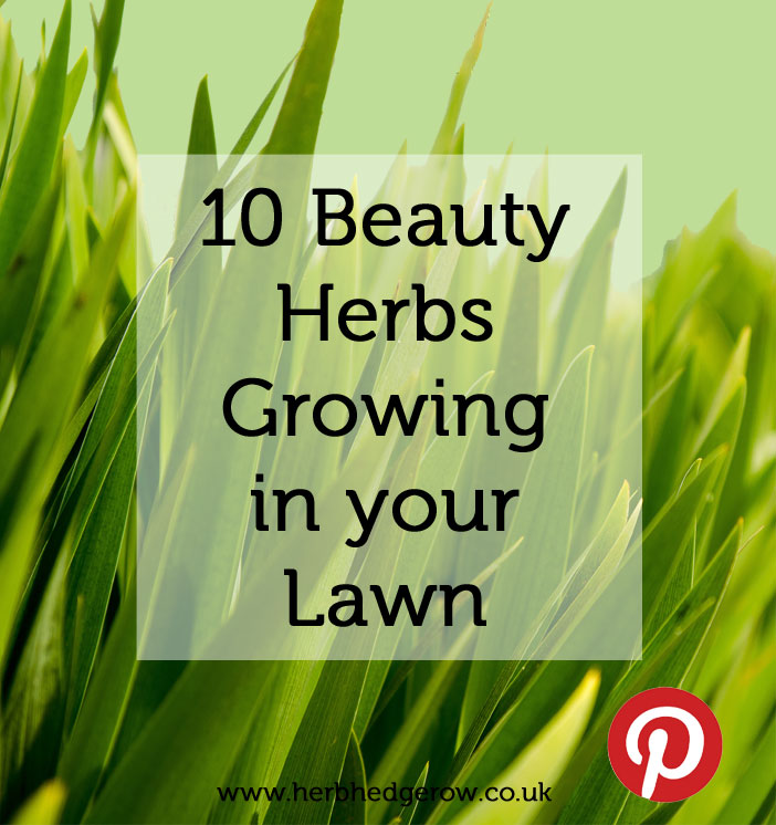 10 Beauty Skincare Herbs Lawn