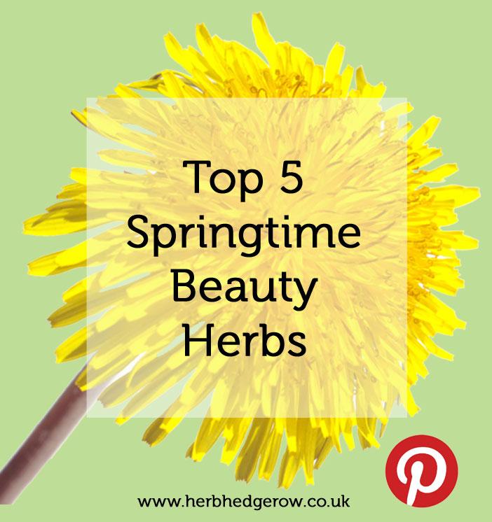 5 Best spring time herbs
