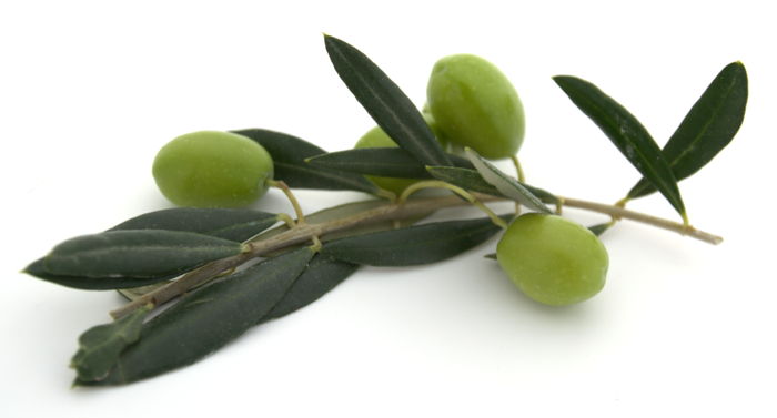 Olive Oil - Natural Beauty throughout History