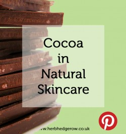 Cocoa in Natural Skincare
