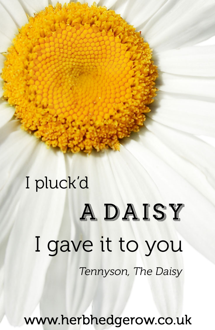 Herbal Quote Daisy Tennyson
