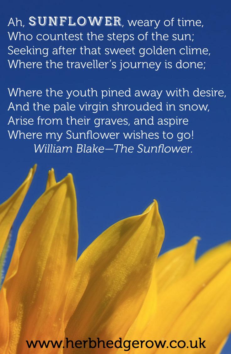 Herbal Quote Sunflower William Blake