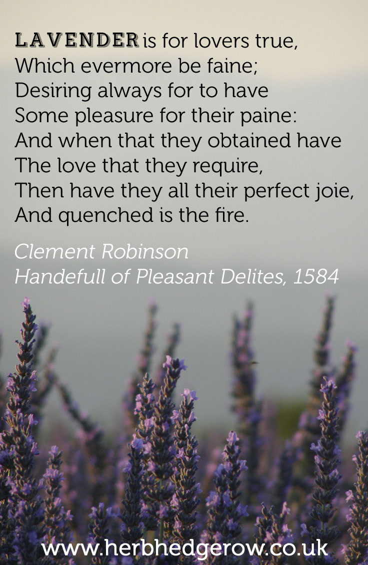 Herbal Quote Lavender Clement Robinson