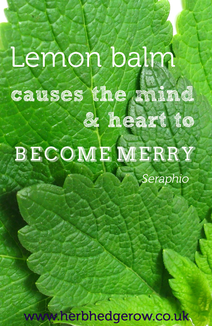 Herbal Quote Lemon Balm Seraphio