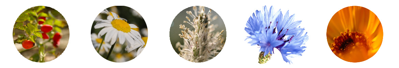 My Fav Herbs