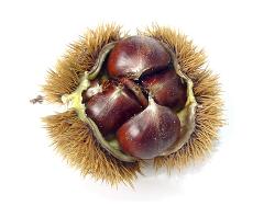 Sweet Chestnut Skincare